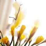 Go och glá påsk!!